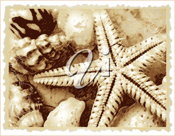Royalty Free Clipart Image of a Starfish and Seashells