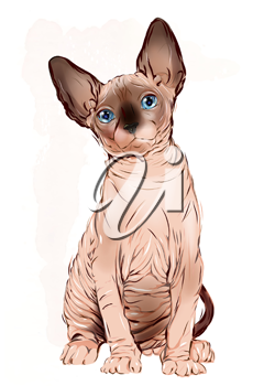 portrait of the  Canadian sphinx cat