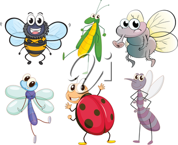 Illustration of the different insects on a white background