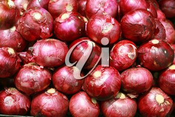 Harvested Red Onions in background