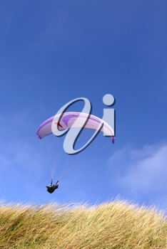 Purple paraglider passing over grass (vertical)