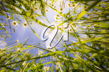 Close up of grass from the ground. Grass view from below