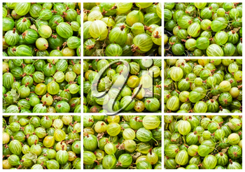 Collection of green gooseberries making full frame background