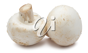 Royalty Free Photo of Two Mushrooms