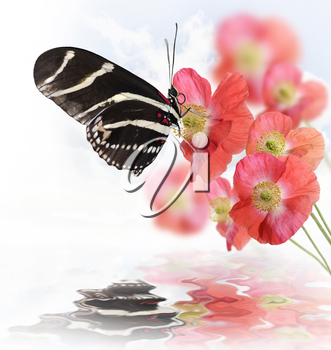 Butterfly And Flowers With Reflection