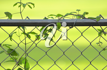 vine on a fence on green background