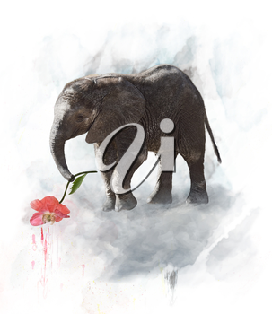 Young Elephant With Red Flower. Watercolor Digital Painting