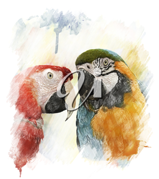 Watercolor Digital Painting Of Two Colorful Parrots