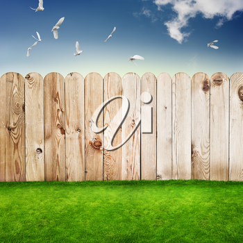 Wooden fence in a green grass