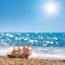 Royalty Free Photo of a Seashell on the Beach