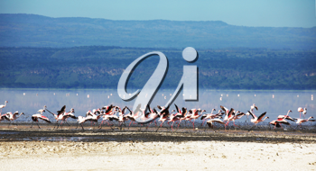 Royalty Free Photo of Flamingos