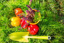 Gardening tools and vegetables in green grass at autumn season.Sunny day.