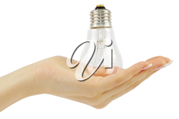 hand holding bulb isolated on white background