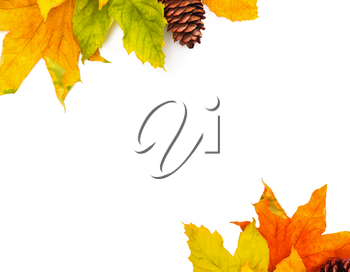 Autumn colored falling leafs isolated on white background