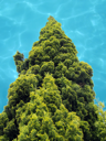 Royalty Free Photo of a Tree