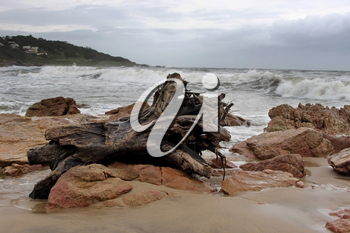Picture of Large Wood Stump on Stormy Beachfront