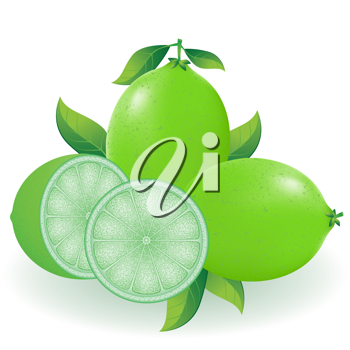 Royalty Free Clipart Image of a Lime
