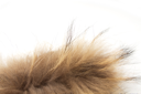 fur on white background