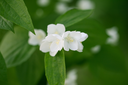 beautiful white flowers on the tree in nature