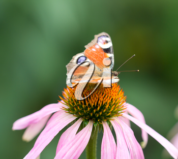 beautiful butterfly on a flower in nature