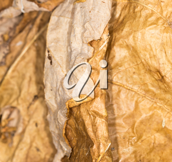 background of dry leaf in the nature. close-up
