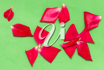 red rose petals on a green background