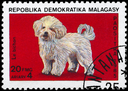 MALAGASY REPUBLIC - CIRCA 1985: A Stamp printed in MALAGASY shows image of a Bichon from the series