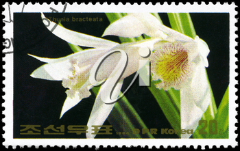 NORTH KOREA - CIRCA 1984: A Stamp printed in NORTH KOREA shows image of a Thunia bracteata, from the series Flowers, circa 1984