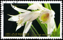 NORTH KOREA - CIRCA 1984: A Stamp printed in NORTH KOREA shows image of a Thunia bracteata, from the series