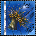 USSR - CIRCA 1991: A Stamp printed in USSR shows image of a Sea Anemone with the description