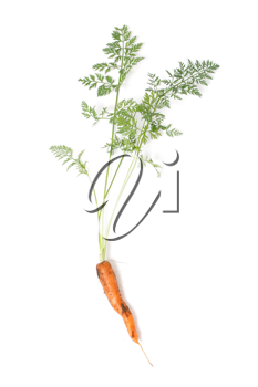 Royalty Free Photo of a Carrot