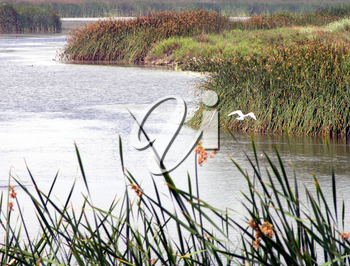 Royalty Free Photo of a Bird in the Wetlands
