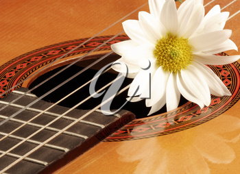 Royalty Free Photo of a Flower on a Guitar