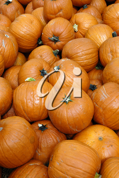 Royalty Free Photo of a Bunch of Pumpkins