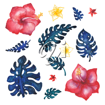 Set of palm leaves. Hand painted watercolor illustration