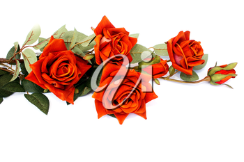 Royalty Free Photo of Roses