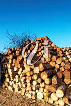 Firewood combined in a woodpile.
