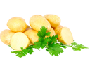 Young potatoes, decorating of parsley . Isolated over white