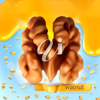 Walnut, vector background