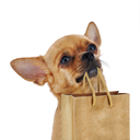 Red chihuahua dog with recycle paper bag isolated on white background. Closeup.
