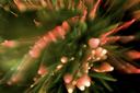 Close-up of red sparkling lights on ends of fir tree branch