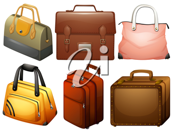 Illustration of the different types of bags on a white background