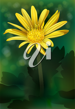 A blooming yellow flower
