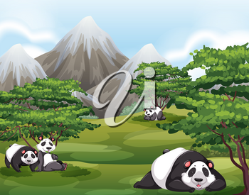 Four panda relaxing in a forest