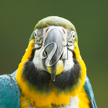 Close-up of a macaw parrot in nature