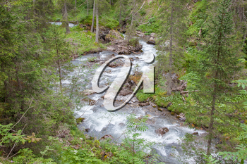 Waterfall in the forest, raging water in Switzerland