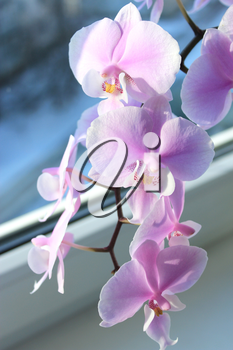 image of beautiful branch of a blossoming orchid