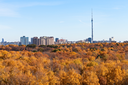 panorama with TV tower and autumn forest in sunny day in Moscow