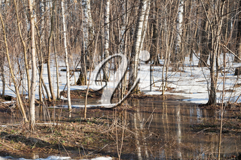 snow melting puddles in birch forest in early spring