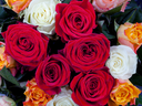 bouquet of different many colored roses close up